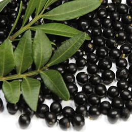 Lentisk Berries